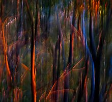 Ghost Trees at Sunset by Michelle  Wrighton