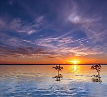 3 Trees @ Wello - Wellington Point Qld Australia by Beth  Wode
