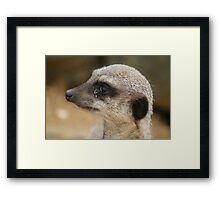Something in my eye Framed Print