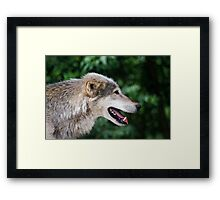 The lone hunter Framed Print