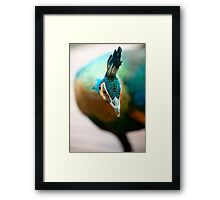 Peacock up close and personal Framed Print