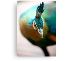 Peacock up close and personal Canvas Print