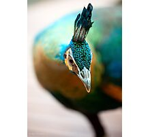 Peacock up close and personal Photographic Print