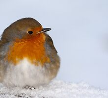 Eglington Park Robin. by Paul Messenger