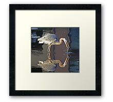 Great blue heron with reflection Framed Print