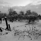 World in Black & White by Jo Nijenhuis