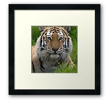The watcher close up Framed Print