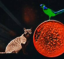 The Cat, the Bird, and the Bubble by Bine