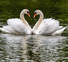 swans in love by kathleenjean