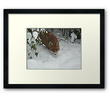 The Search for Food Framed Print