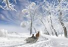 Winter Day by Igor Zenin