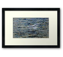 A gentle touch down Framed Print