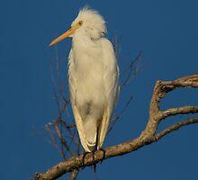 Spring Feathers by byronbackyard