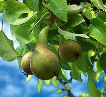 Pears by lynn carter