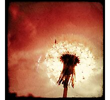 The Red Dandelion Photographic Print