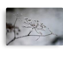 Winter Fennel Canvas Print