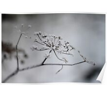 Winter Fennel Poster