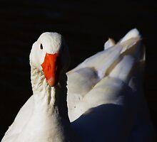 Goosey Gander by Alison M