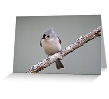 Tufted titmouse perched on a branch Greeting Card