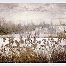 Stillness of winter by Olga