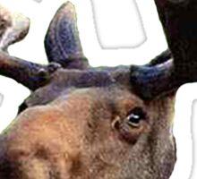 Moose Head Sticker