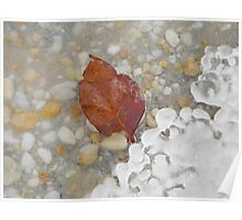 Icy Leaf Poster