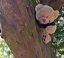 Teddy.s up a tree........ by lynn carter