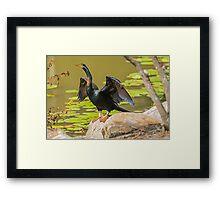 Snakebird/Australian Darter Framed Print