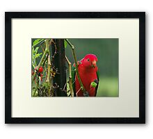 Thief in the Garden Framed Print