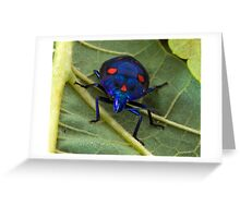 Harlequin/Hibiscus Bug Greeting Card