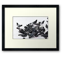 Pigeons in snow Framed Print