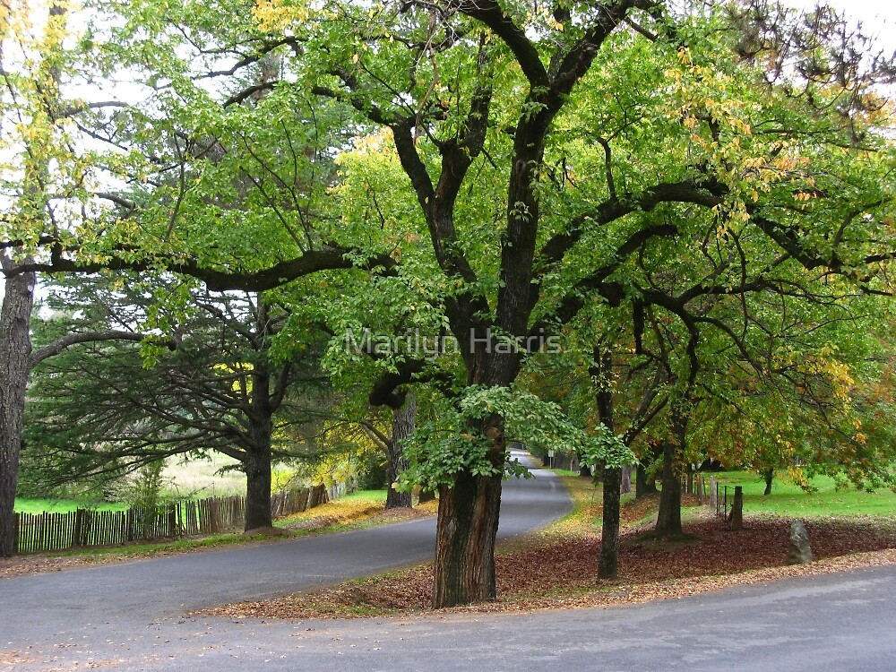 Trees - Hill End Road Junction by Marilyn Harris