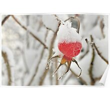 Snowy hat on a Rose's hip Poster