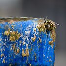Thirsty Wasp by Agro Films