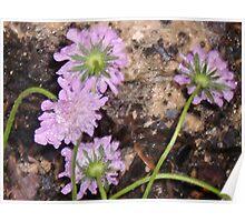 Flowers on Granite Poster