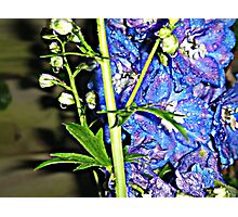 Blue Flowers (Brighter Edition) Photographic Print