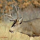 Fall Stag  by Holly Werner
