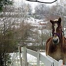 The horse in winter by maryevebramante