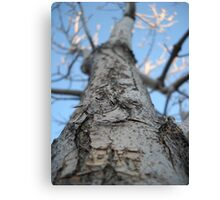 Untitled No. 2 in Blue, Tree, Durango, CO, 2010 Canvas Print