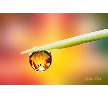Daylily in a Droplet Photographic Print