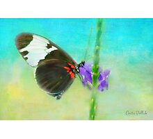Butterfly on a Flower Photographic Print