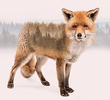 Fox Double Exposure by DoucetteDesigns