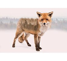 Fox Double Exposure Photographic Print