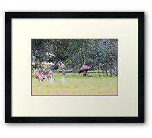 Emus & Kangaroos Framed Print
