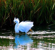 Egret 5 by dandefensor