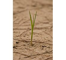 One blade of grass Photographic Print