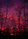 Red Sky                   by NatureGreeting Cards ©ccwri