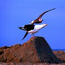 Seagull in midflight by dandefensor