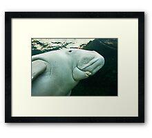 Dugong - Sydney - Australia Framed Print