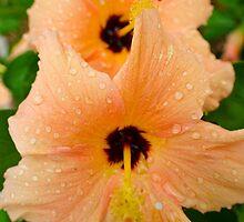 peach hibiscus_2 by Jamie317